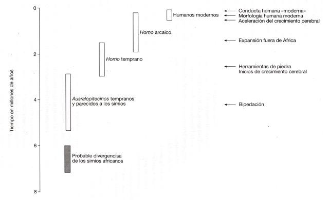 gráfico comparativo evolución humana